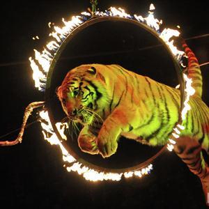 Цирки Батайска