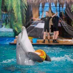 Дельфинарии, океанариумы Батайска