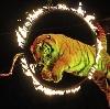 Цирки в Батайске
