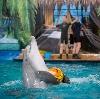 Дельфинарии, океанариумы в Батайске